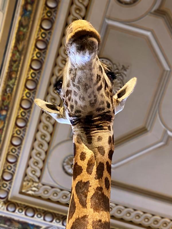 Naturhistorisches Museum in Wien