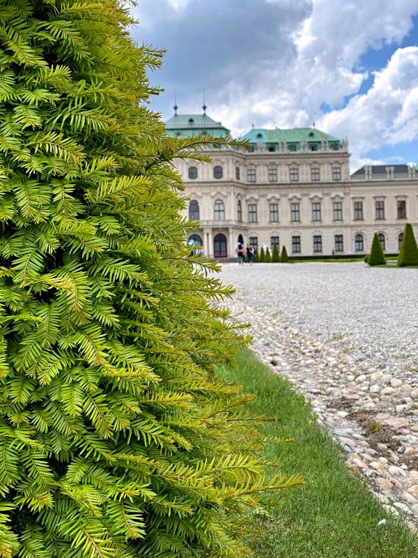 Belvedere Schloss leicht versteckt hinter einer grünen Hecke